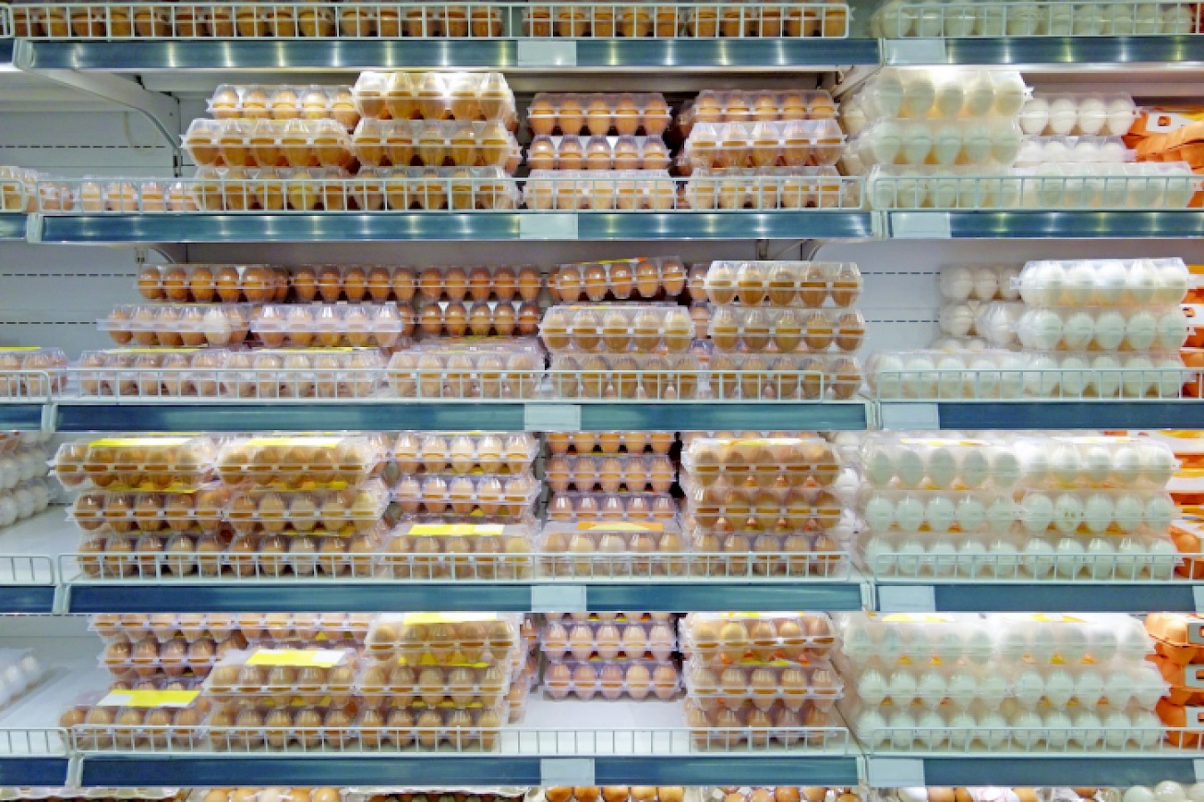 Six States to Appeal California Egg Law Decision