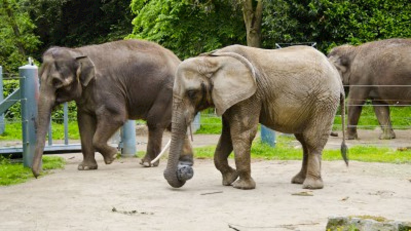 Judge Rules in Favor of Elephant Move Despite Animal Activists' Objections