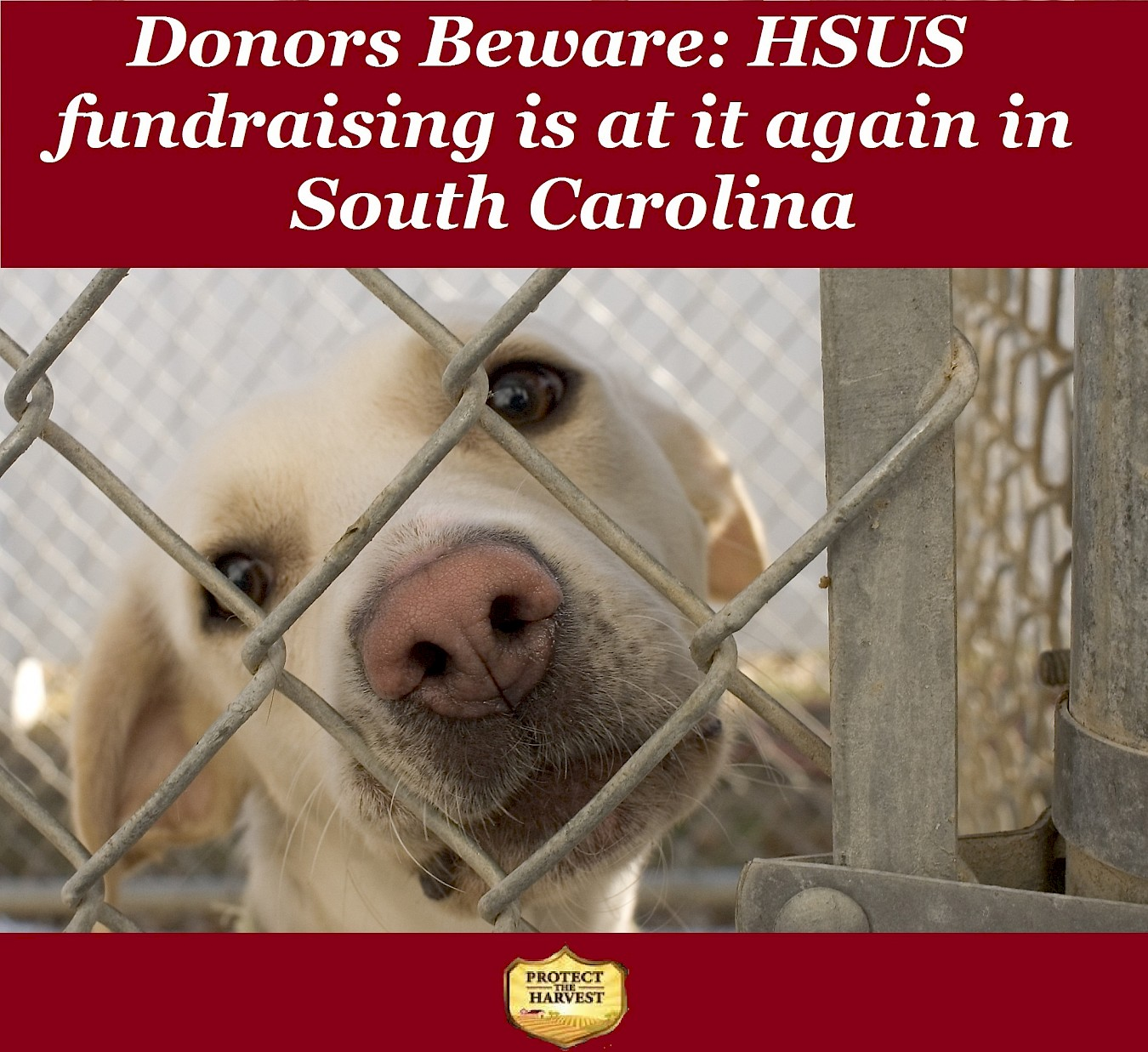 Be Wary of HSUS Fundraising in South Carolina
