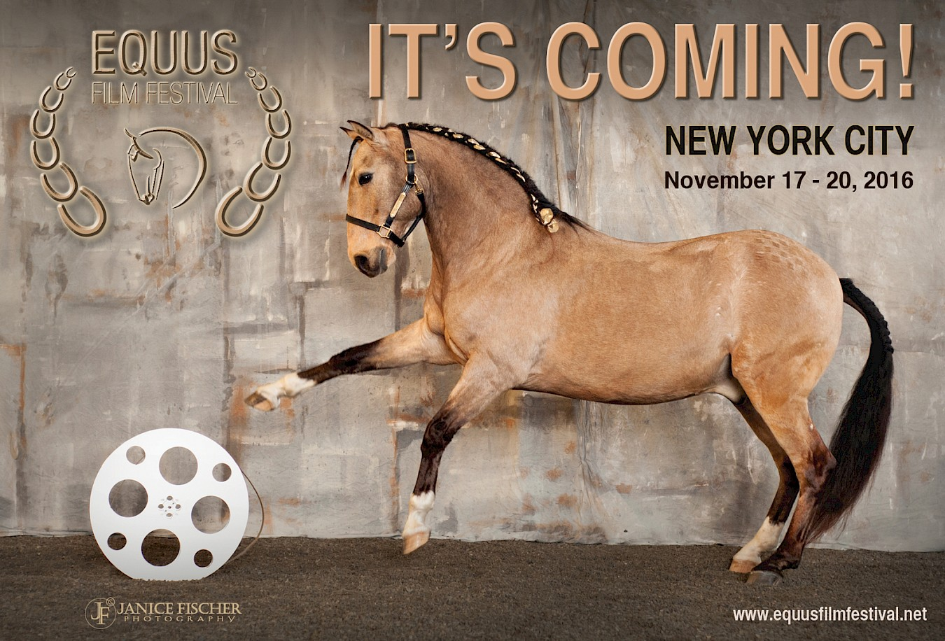 Protect The Harvest Is Proud To Stand With Equus Film Festival