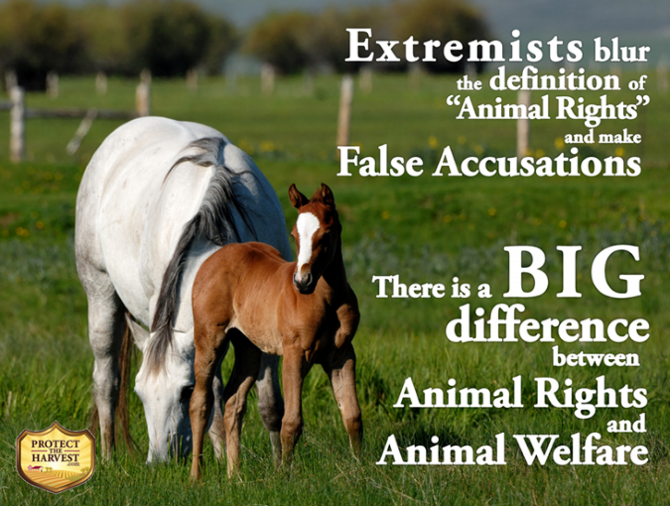 Animal Rights and Animal Welfare - Know The Difference