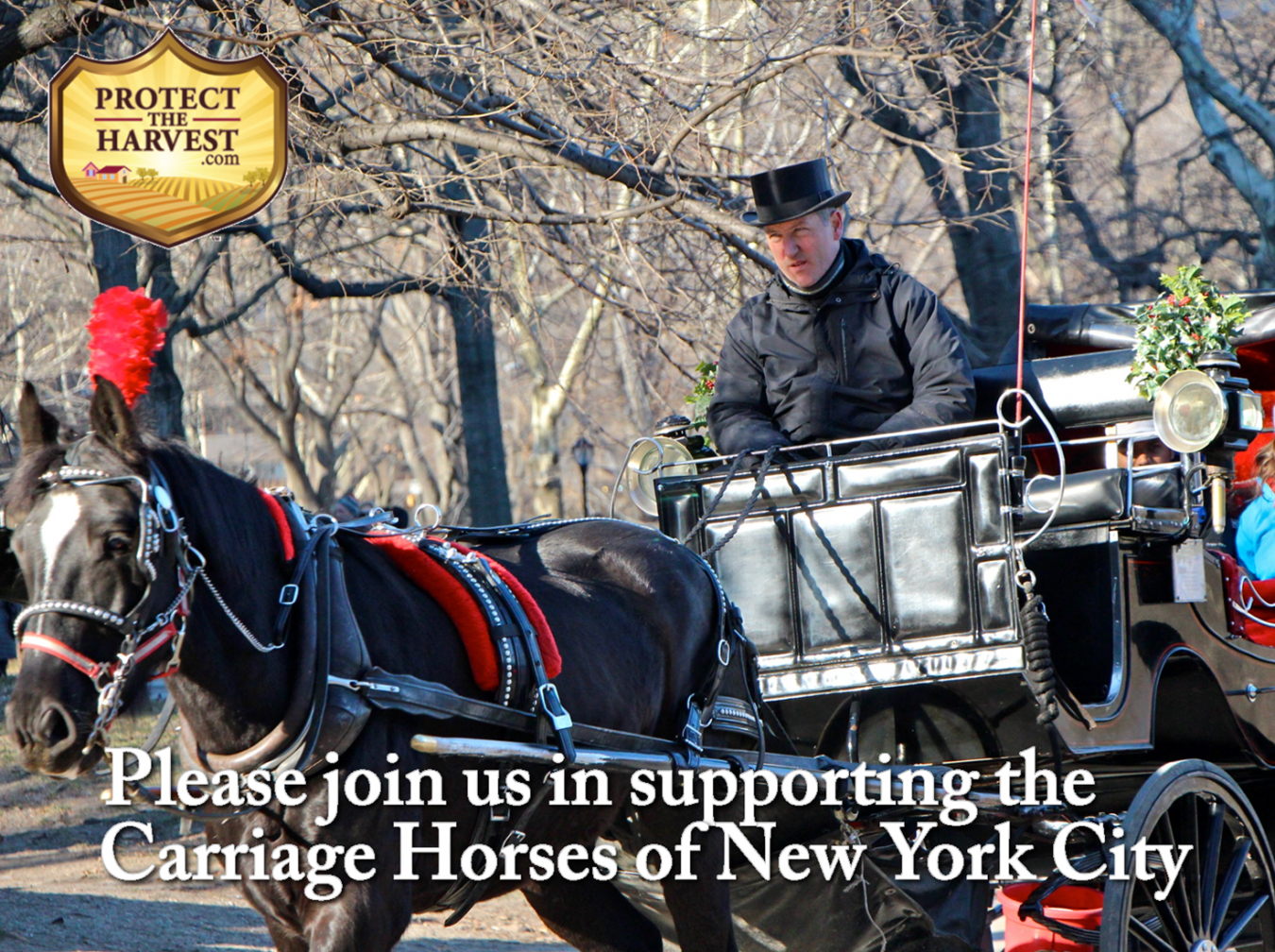 Carriage Horse Industry Needs Support