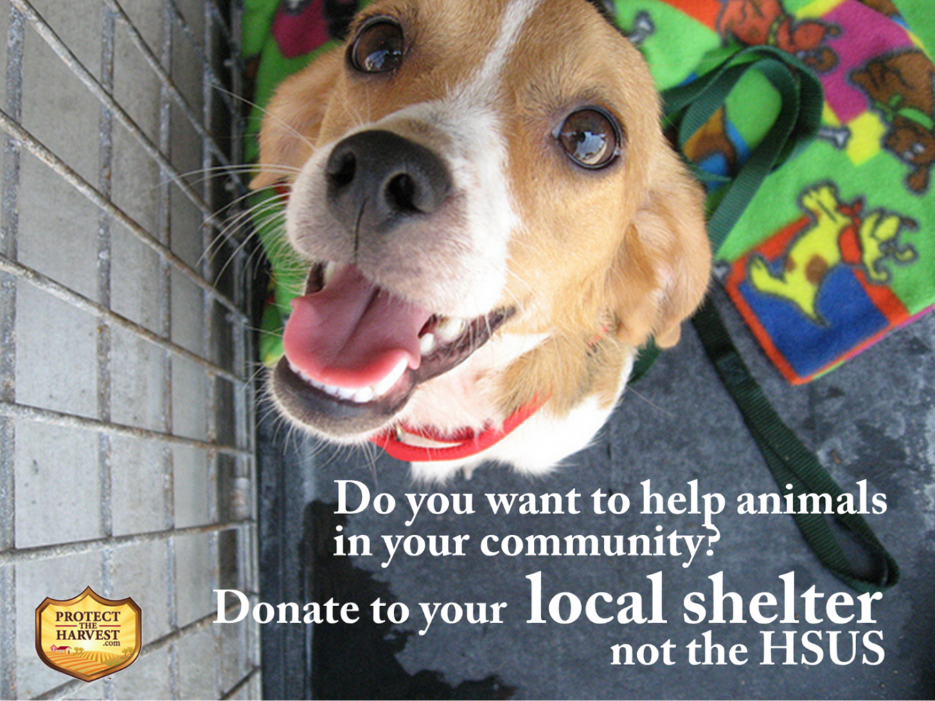 Help Animals in Your Community - Give Local