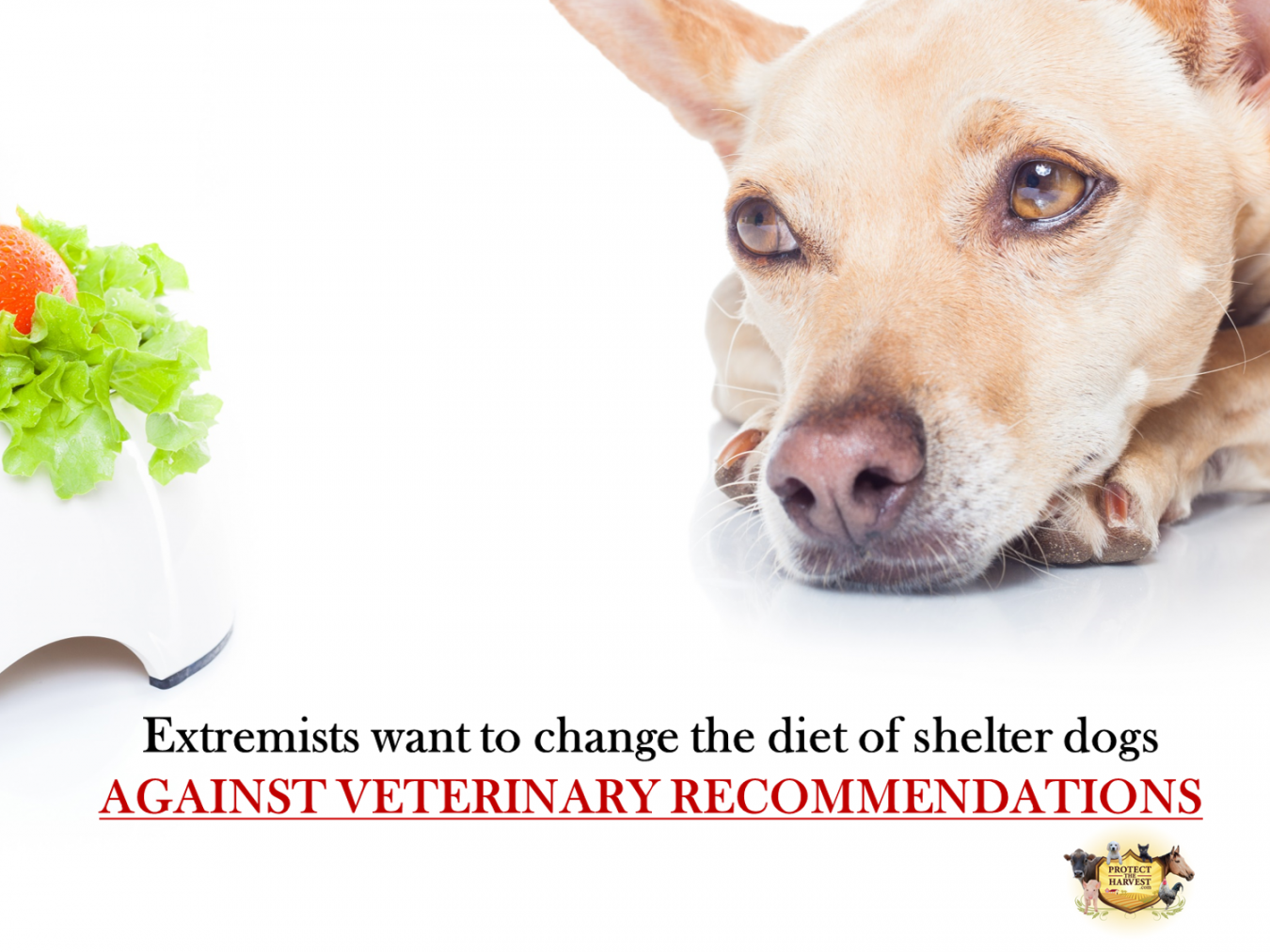 Hollywood Celebrities Push Vegan Food on LA County Shelter Dogs