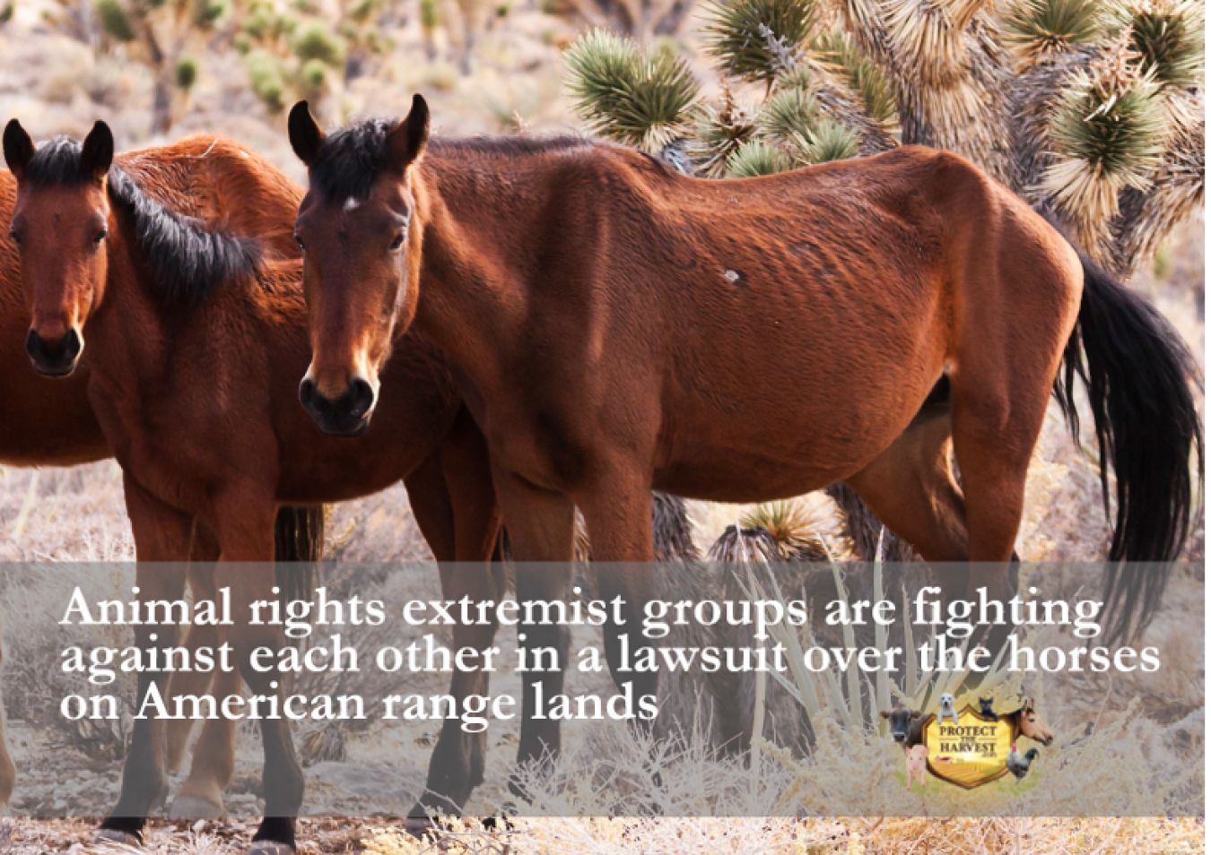 Animal Rights Extremist Groups Fighting Against Each Other in a Lawsuit Over Horses on American Rangelands