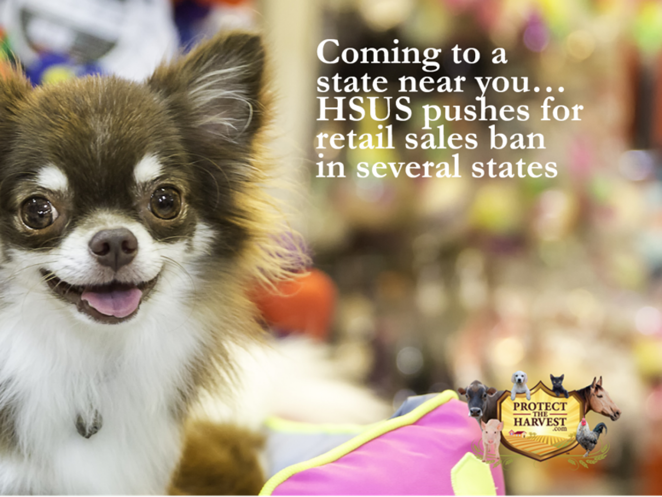 Coming to a State Near You - More Pet Store Bans