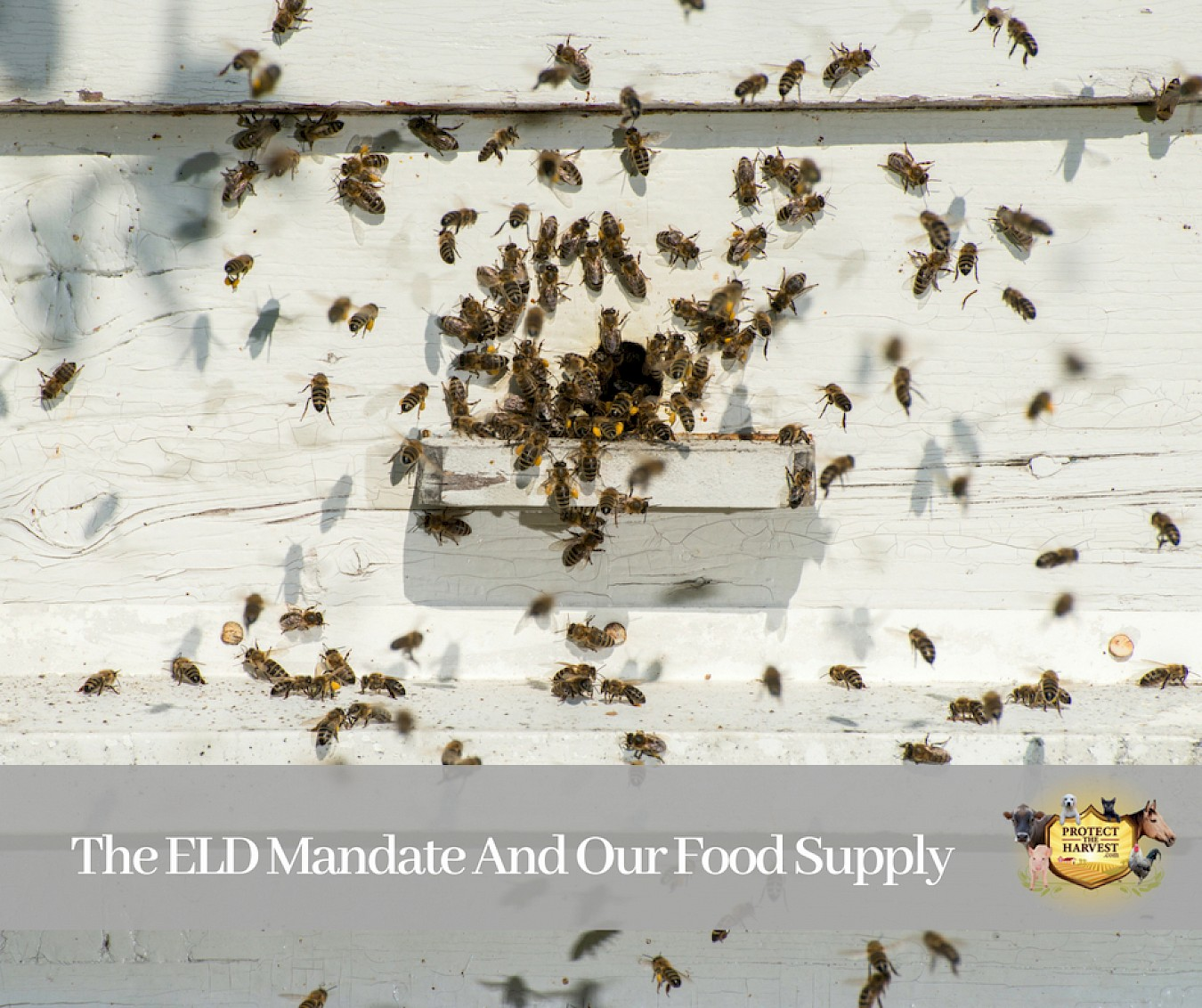 The Eld Mandate And Our Food Supply