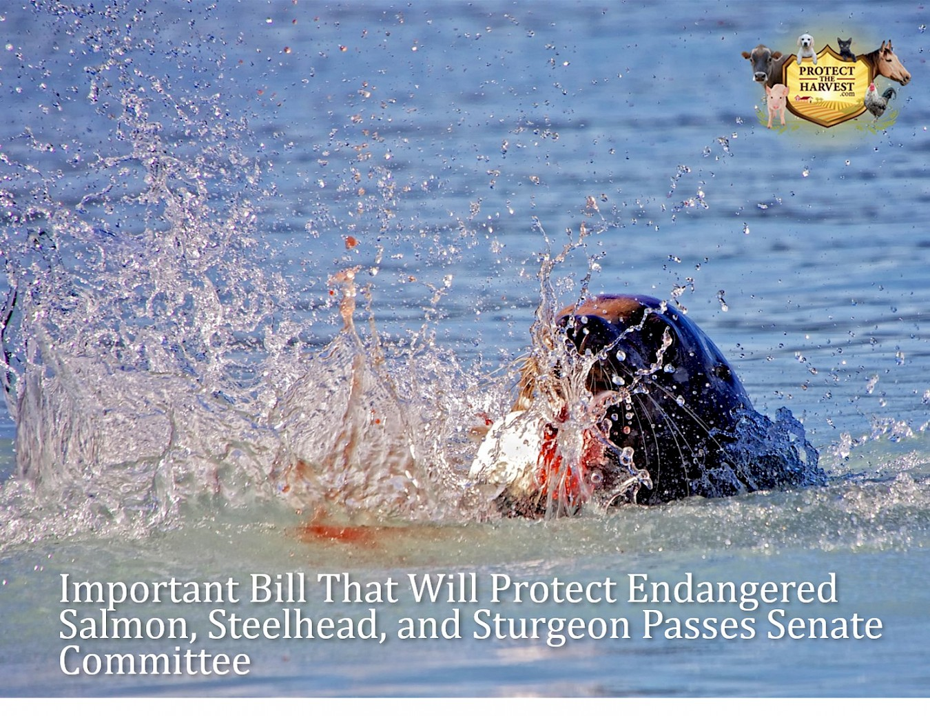 Important Bill That Will Protect Endangered Salmon, Steelhead, And Sturgeon Passes Senate Committee