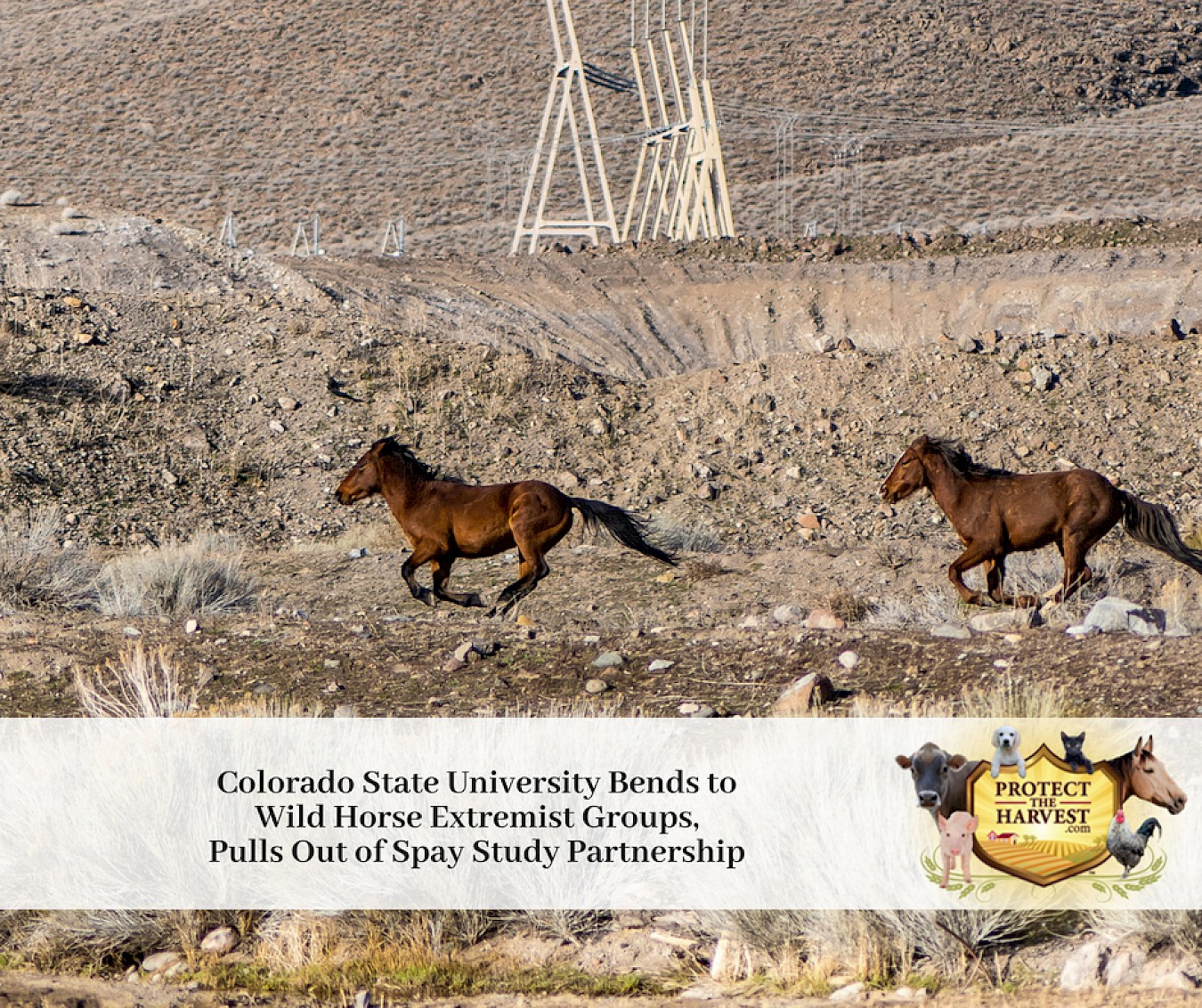 Colorado State University Responds To Pulling Out Of BLM Spay Study