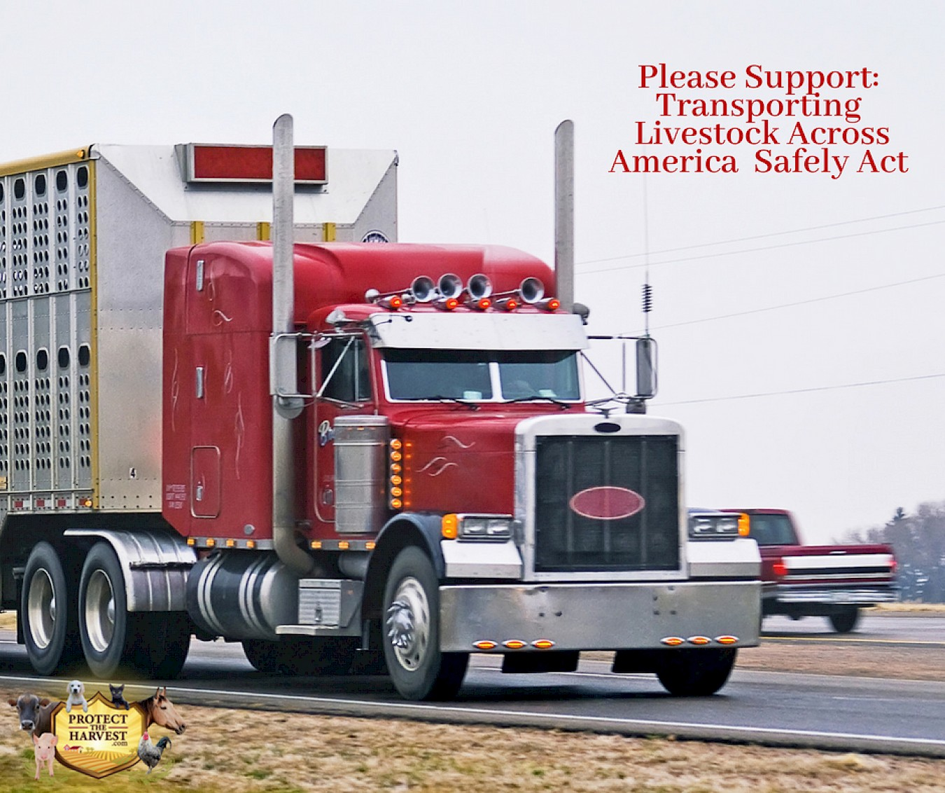 Please Support: Transporting Livestock Across America Safely Act