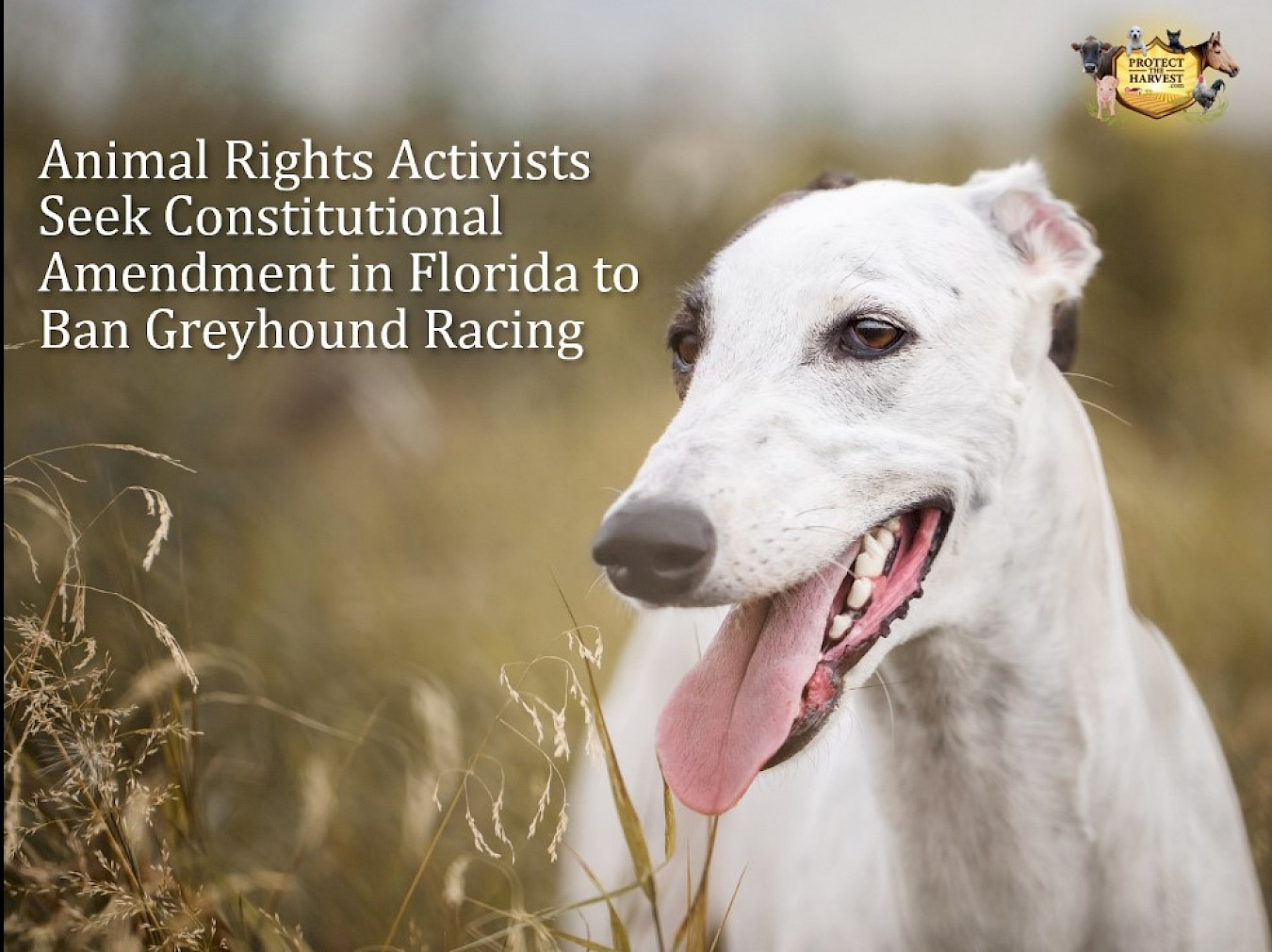 Animal Rights Activists Seek Constitutional Amendment in Florida to Ban Greyhound Racing