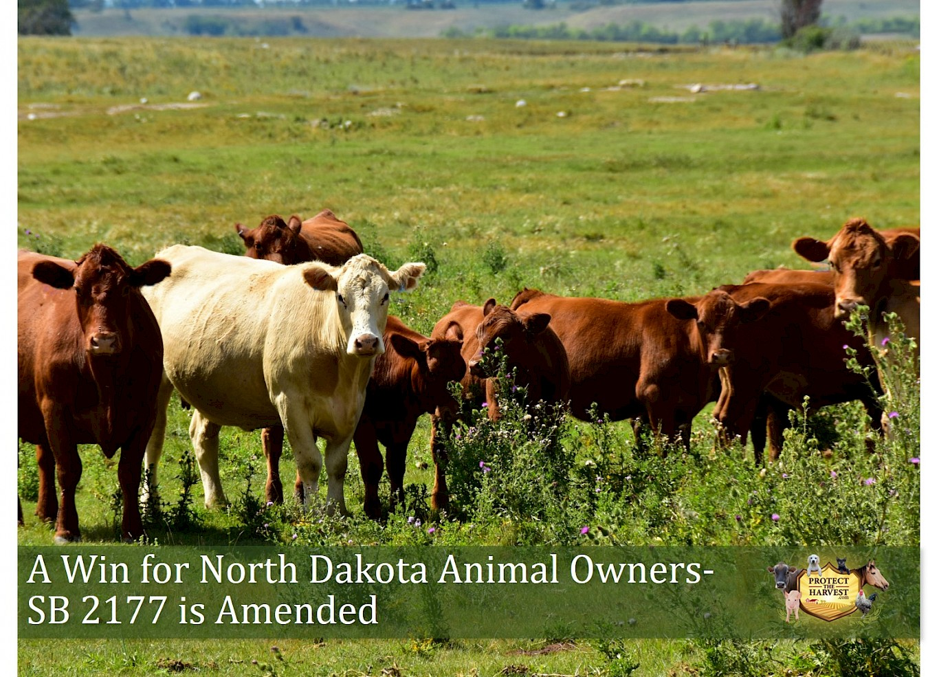 A Win For North Dakota Animal Owners - SB2177 is Amended