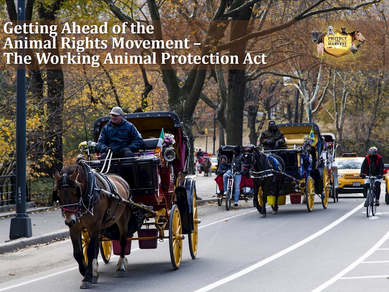 Getting Ahead of the Animal Rights Movement - Working Animal Protection Act