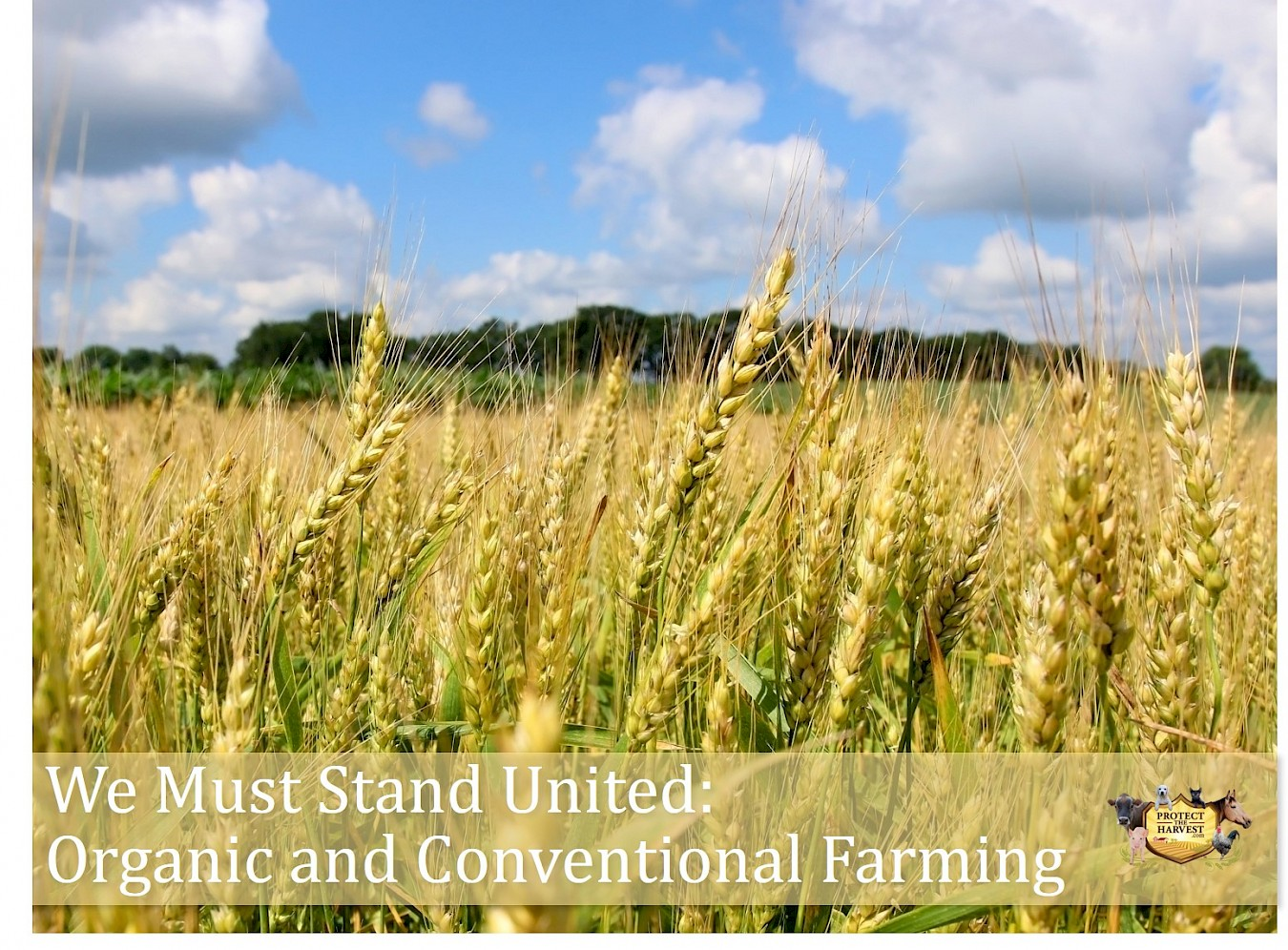 We Must Stand United - Organic and Conventional Farming