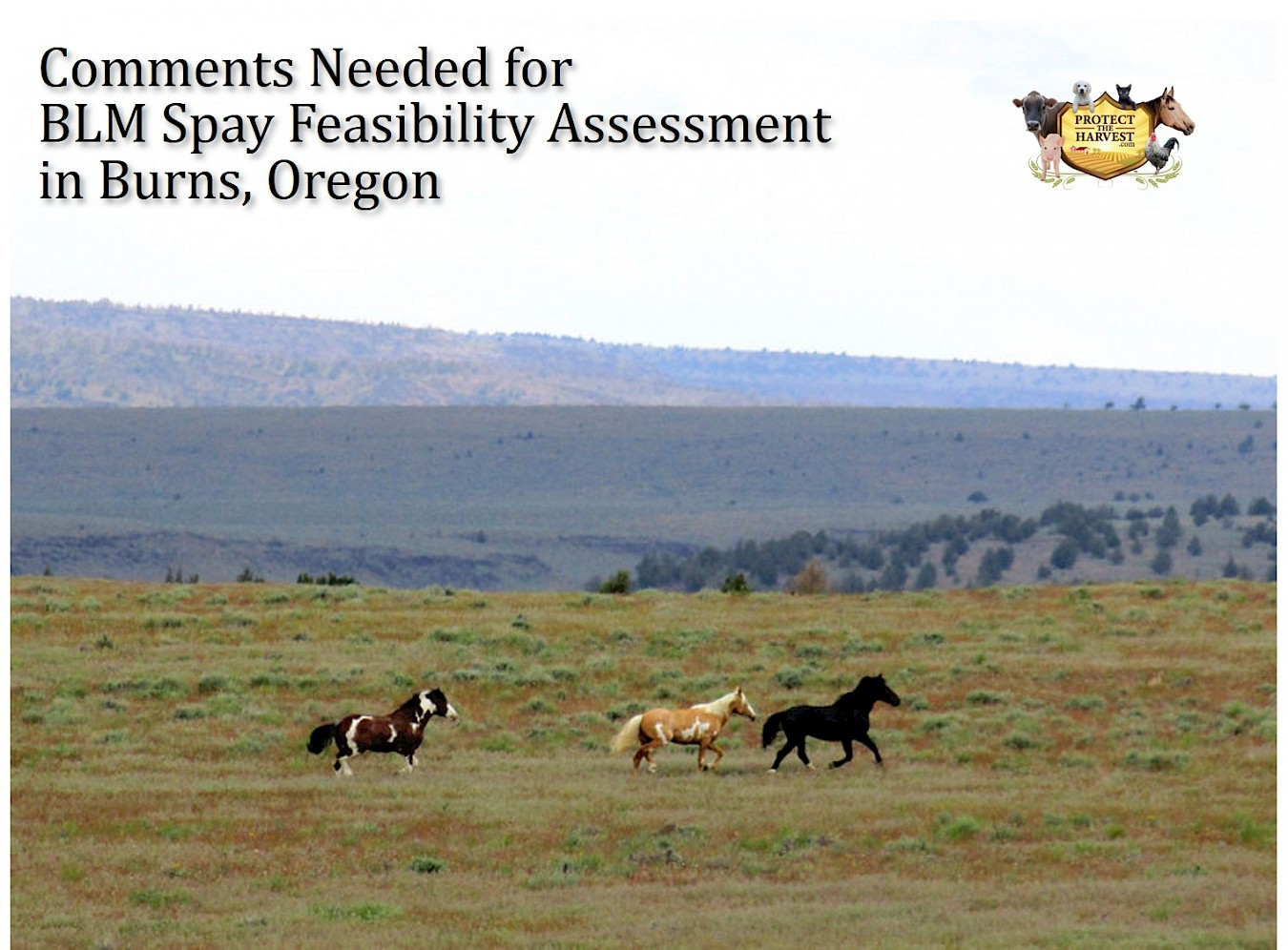 BLM Opens Comment Period for New Spay Feasibility Study