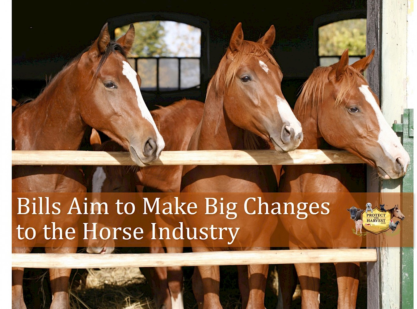 Bills Aim to Make Big Changes to the Horse Industry
