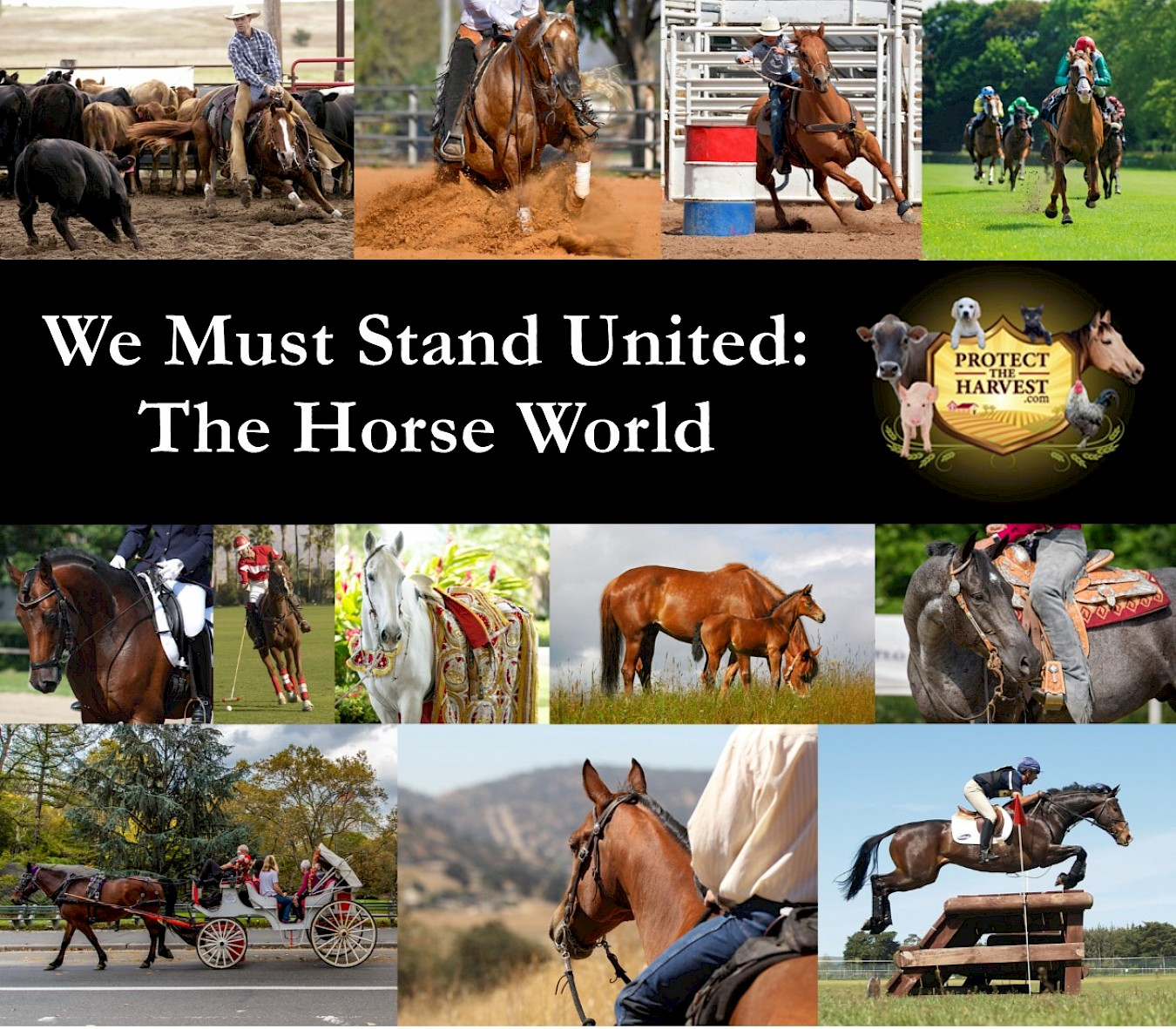 We Must Stand United - The Horse World