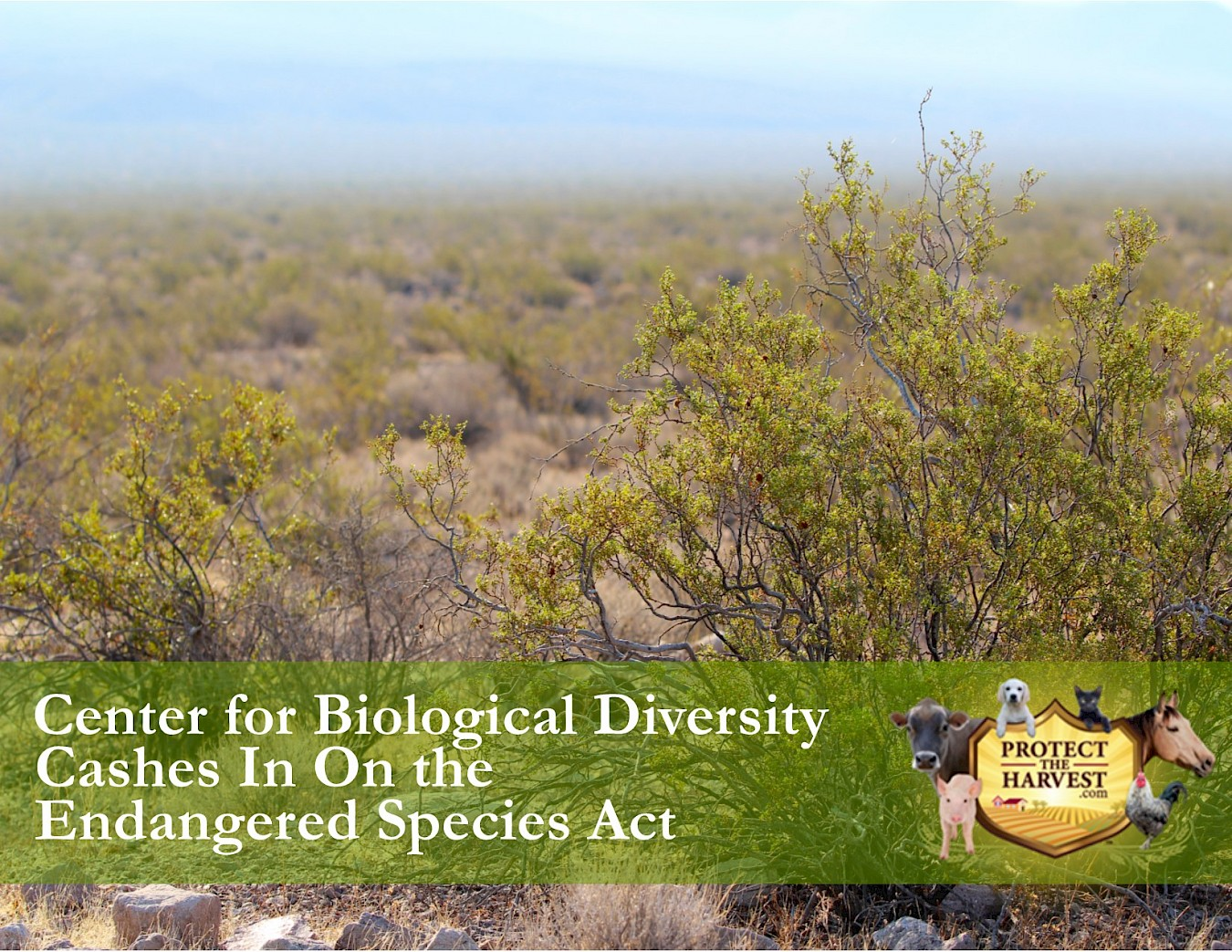 """Welfare Environmentalists"": The Center for Biological Diversity"
