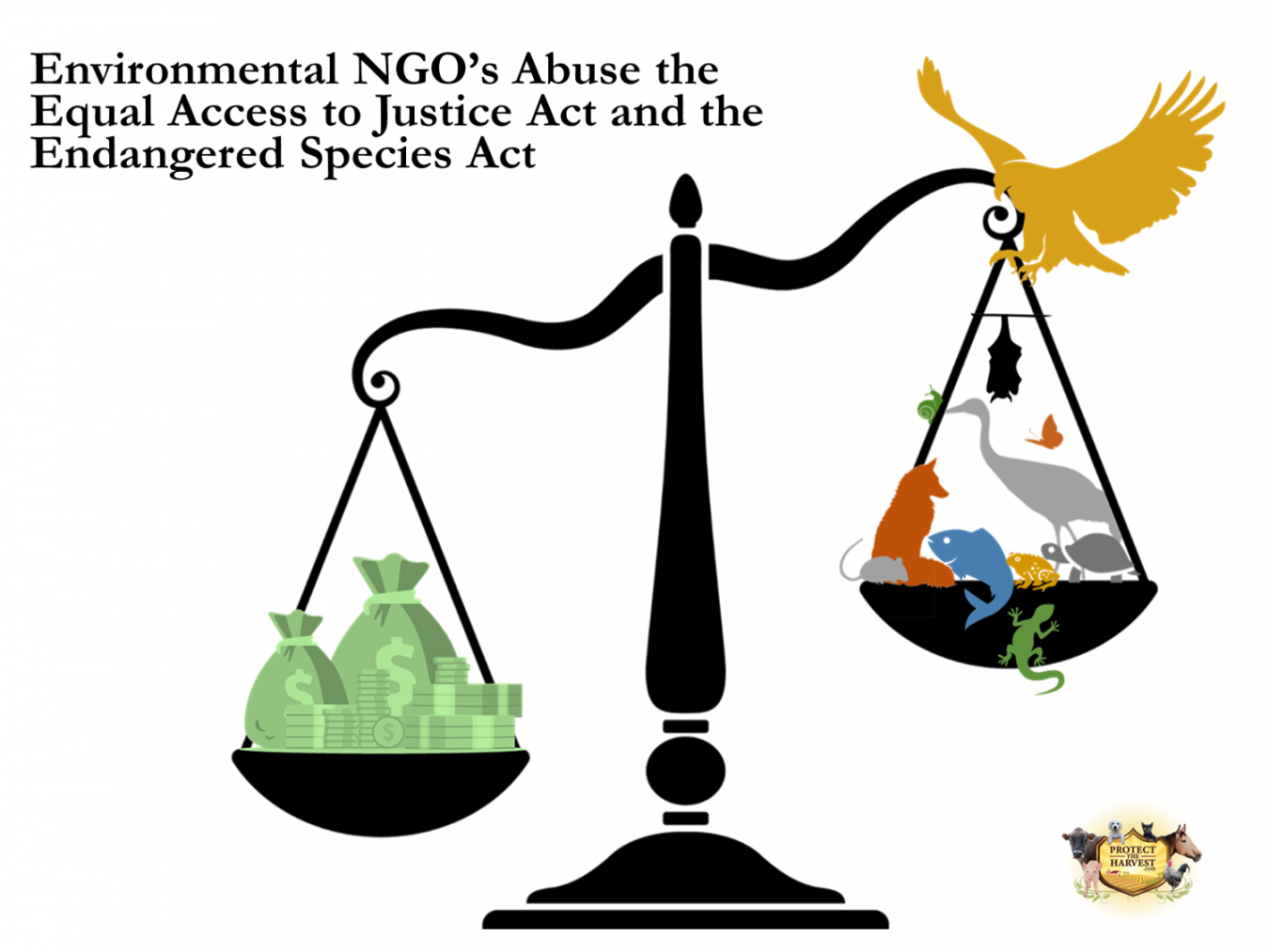 Many Environmental NGO's Do Nothing to Actually Protect The Environment