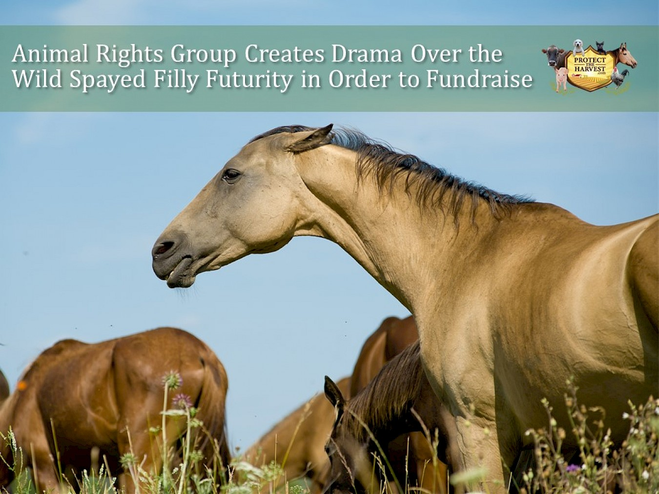 Animal Rights Group Creates Drama Over Wild Spayed Filly Futurity in Order to Fundraise