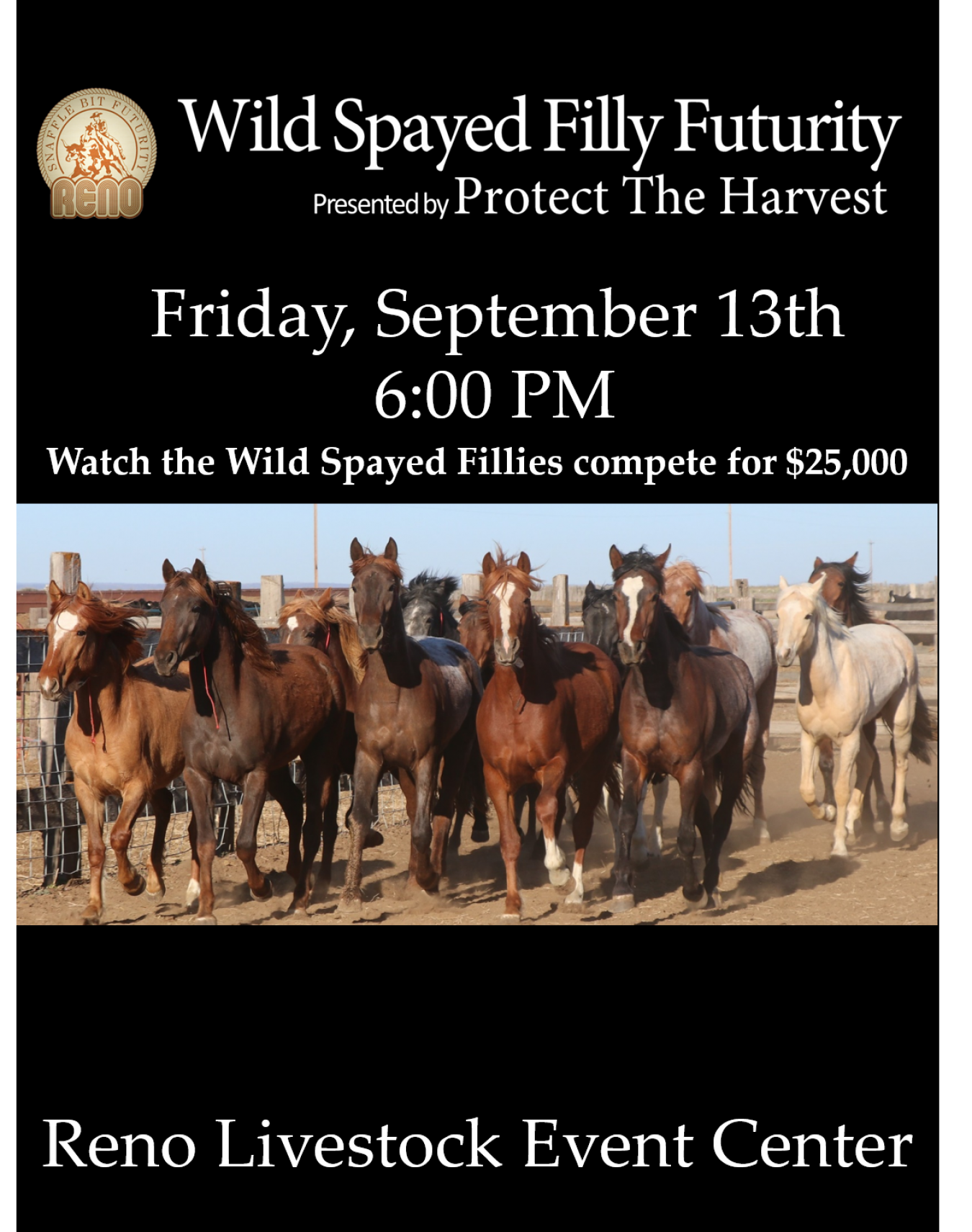 Watch the Wild Spayed Filly Futurity Live!
