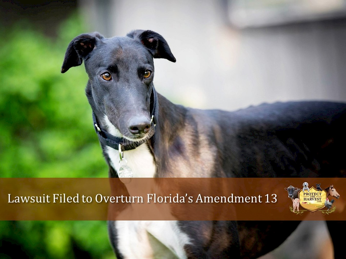 Lawsuit Filed to Overturn Florida's Amendment 13