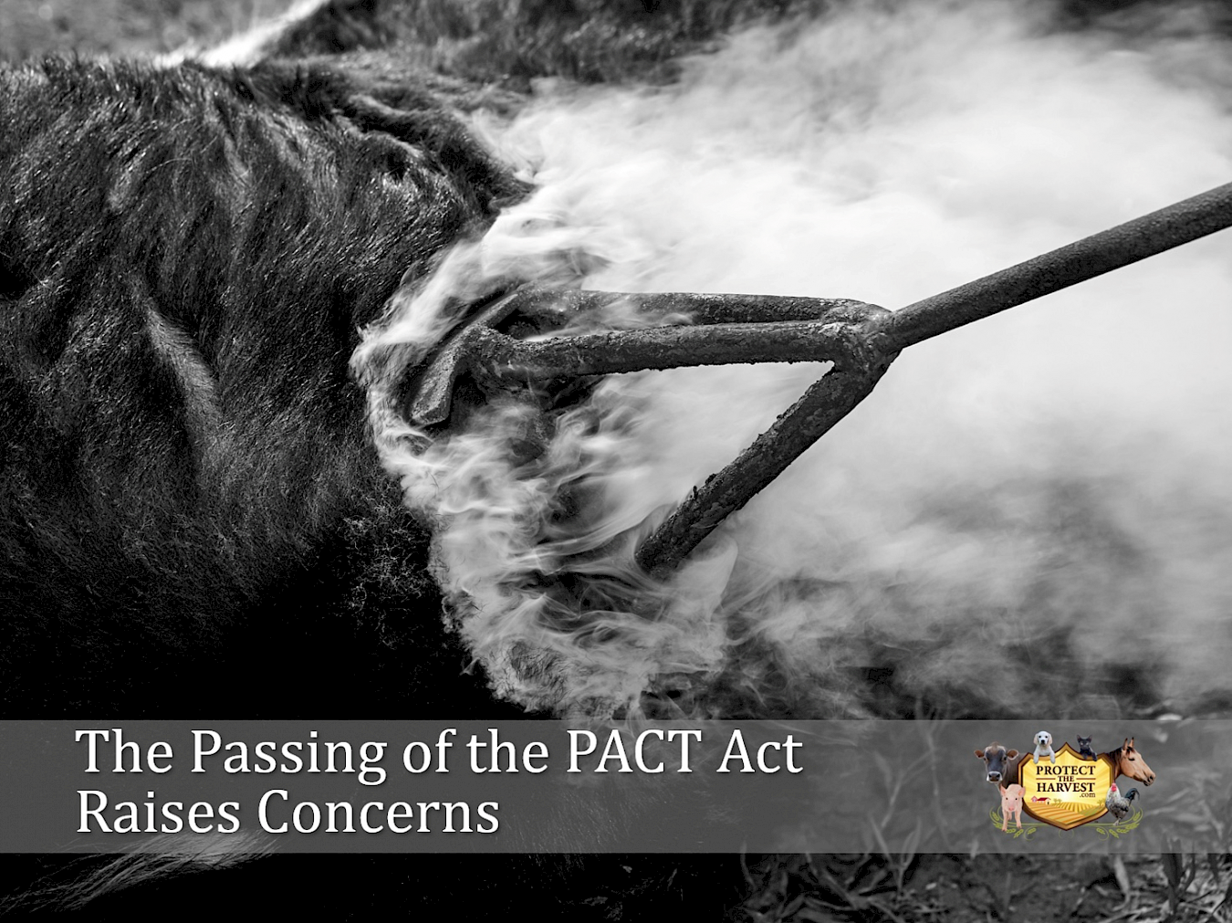 The Passing of the PACT Act Raises Concerns