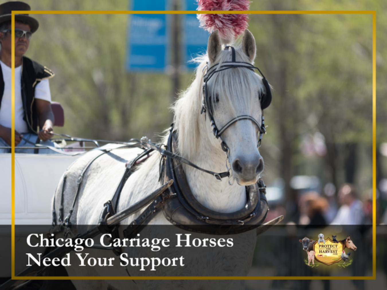 Save Chicago Carriage Horses