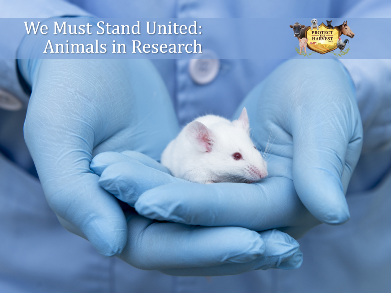 We Must Stand United - Animals in Resarch