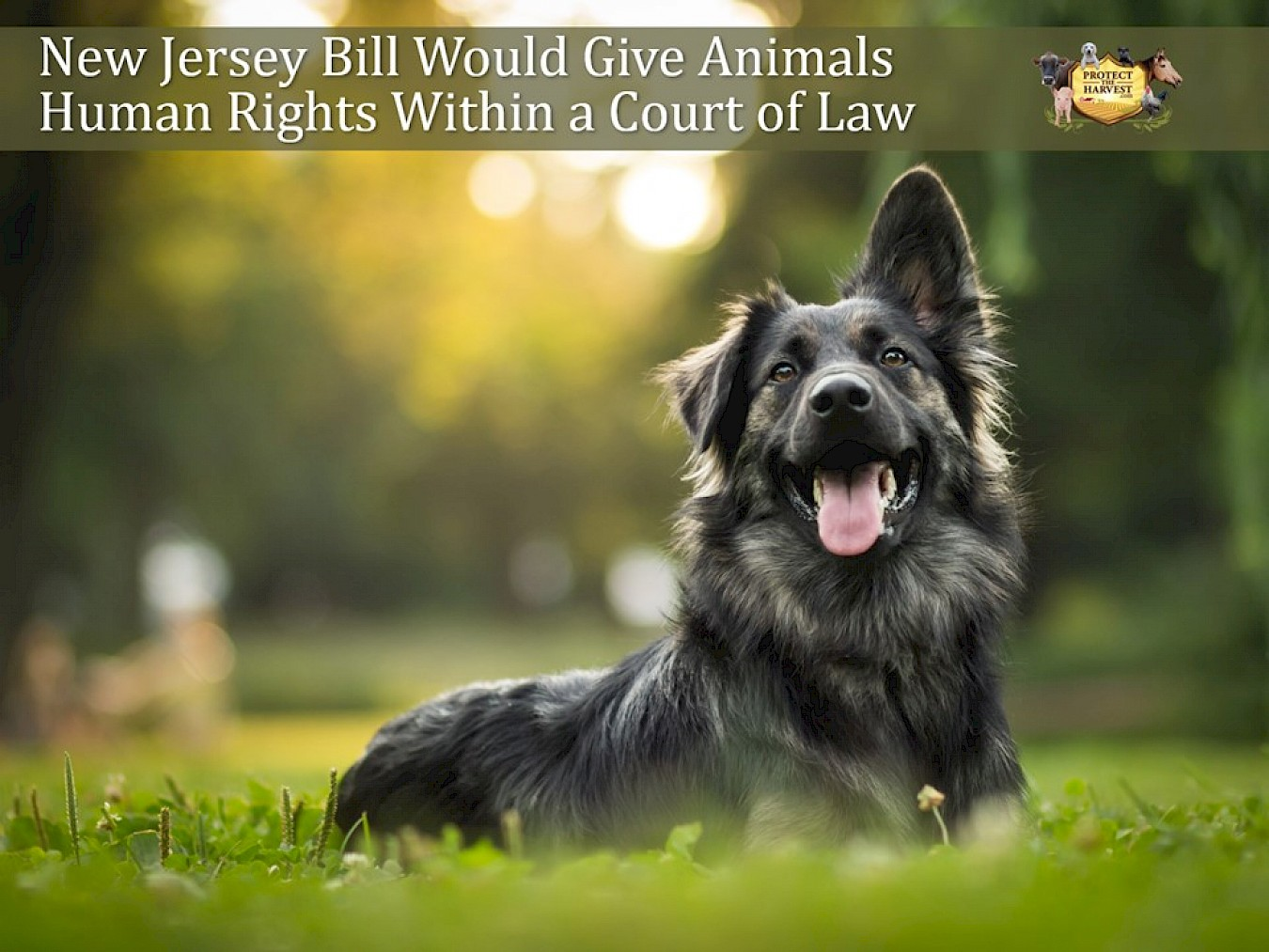 New Jersey Bill Would Give Animals Human Rights Within a Court of Law