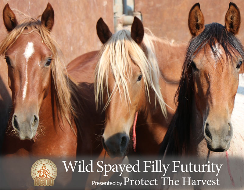 Wild Spayed Filly Futurity